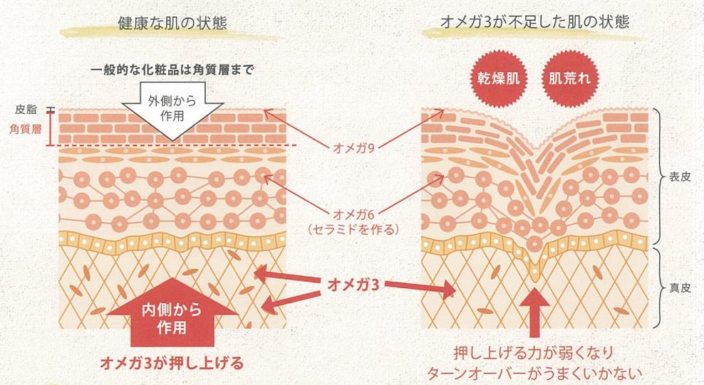 健康な肌の状態とオメガ3が不足した肌の状態