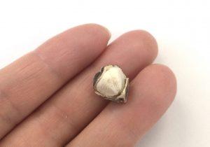 剥いたモリンガの種子