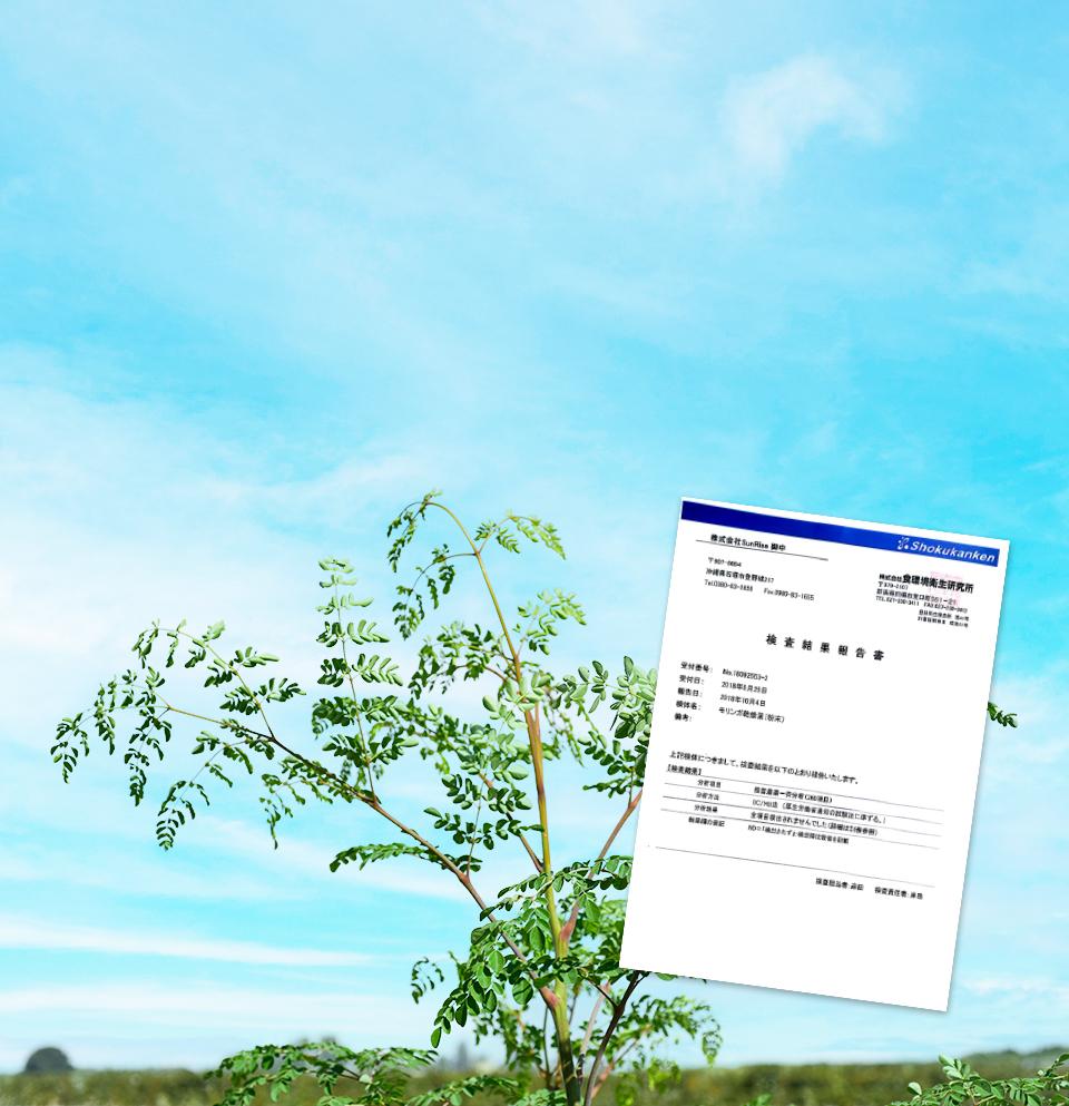 原材料のモリンガも 農薬・化学肥料 不使用